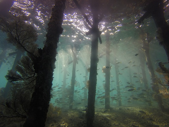 underwater-1300930_640